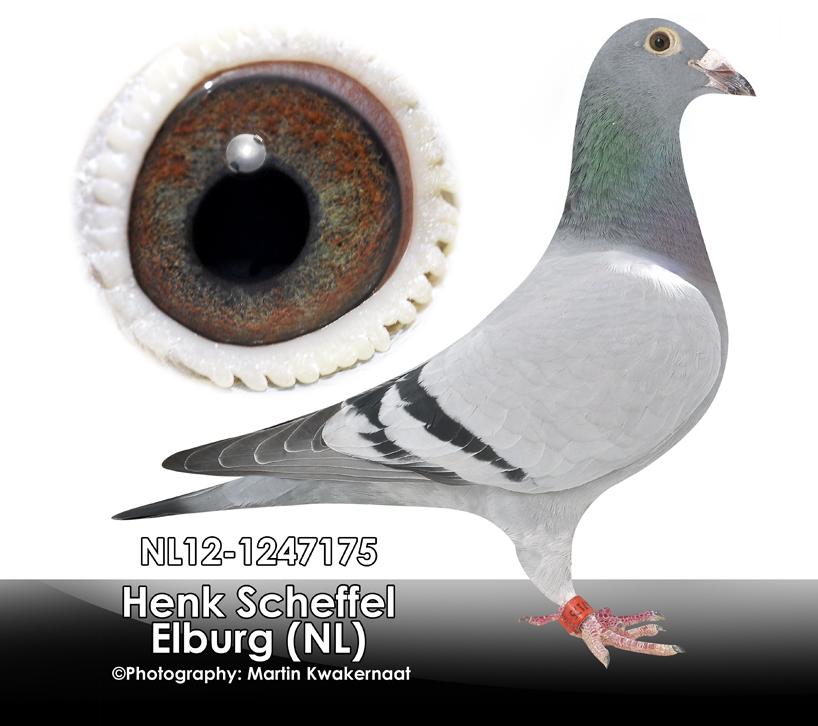 NL12-1247175_inge_foto